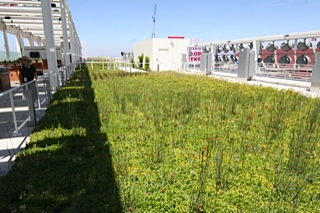 Greenery and solar panels on roof